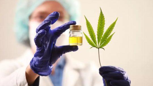 2021 : les laboratoires Boiron de Lyon vont bientôt participer à l'expérimentation sur le cannabis thérapeutique